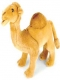 Camel.Jablonec