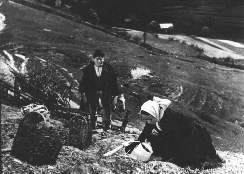 Pole neorané (1953)