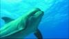 Perla Oceánů 3D (2003)
