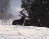 Vzestup černého vlka (2010) [TV film]