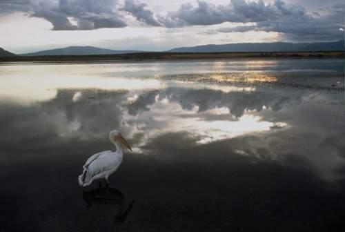 Ptačí svět (2001)
