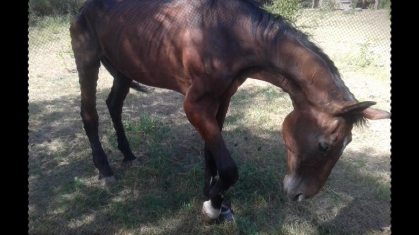 kauza - týraného koně