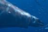 Monstra oceánů 3D: Pravěké dobrodružství (2007)