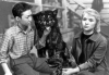 Divoký pes Dingo (1962)