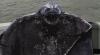 Netvoři z Beringova moře (2013) [TV film]