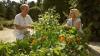 Kouzelné bylinky (2014) [TV cyklus]