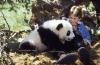 Dobrodružství malé pandy (1995)