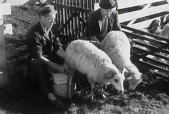 Není stále zamračeno (1950)