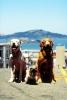 Neuvěřitelná cesta 2 - Ztraceni v San Francisku (1996)