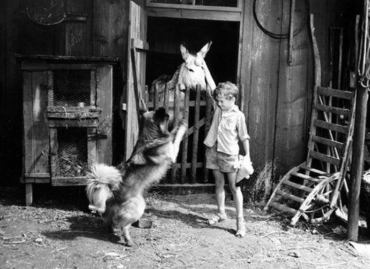 Dědeček, Kyliján a já (1966)