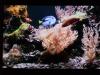 Cosy Fire / Deep Blue (2008) [DVD]