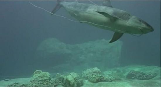 Poslední žralok (1981)