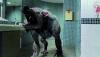Vlkodlak: Zabijácký virus (2013) [TV film]