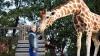 Můj žirafák (2017)