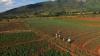 Chimanimani - Rozvoj komunity a ochrana přírody (2018)