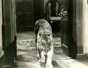 Black Zoo (1963)