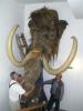 Po dobu rekonstrukce Národního muzea visí hlava mamuta z tohoto seriálu na novém pracovišti v Horních Počernicích.