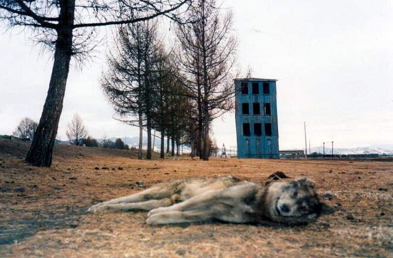 Stát psů (1998)