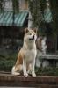 Hačikó - příběh psa (2009)