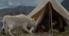 Pláč pro vlka (1983)