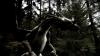 Merlin a válka draků (2008) [Video]