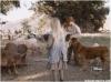 Prasečí farma (1974) [TV film]