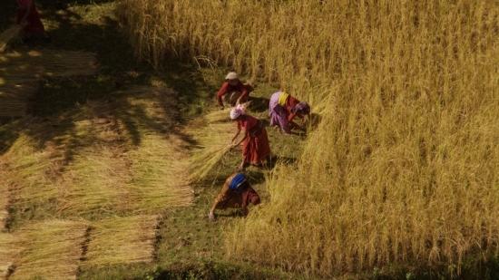"""Home 08 © """"HOME"""" – an ELZEVIR FILMS – EUROPACORP coproduction Sklizeň pšenice v údolí Dades, Nepál (31°26' N – 6°01' W)."""