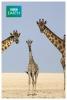 Afrika - Kalahari
