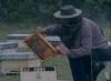 Včelař (1986)