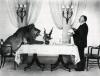 Alfred Jitchcock podává snídani lvovi Leovi 1957
