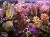 Korálový útes (1990)