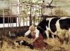 Viechereien (1977) [TV film]