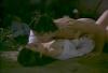 Láska a stín (1994)