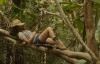 Zákon přežití v džungli (2016)
