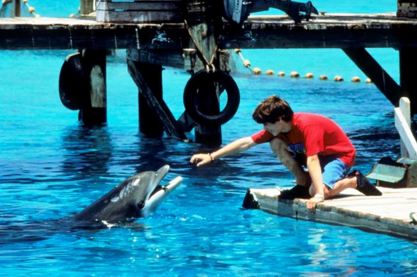 Delfín Filip (1996)