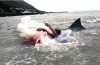 Žraloci útočí (2005) [TV film]