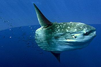 Tajemství oceánu (2003)