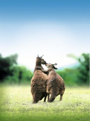 Zamilovaná zvířata (2007)