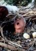 Utopenec na útěku (1998)