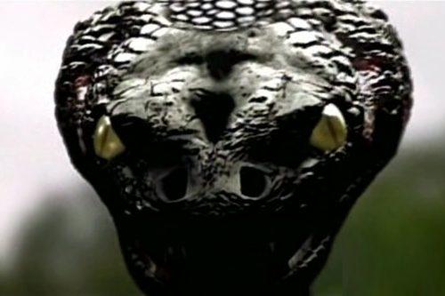 Děti Anakondy (2008) [TV film]