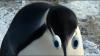 Holky jdeme na to aneb putování tučňáků (2007)