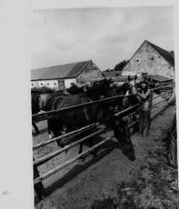 píseň - Větře foukej a krásní jezdečtí koně na farmě v Šenkvicích Marta Holubová - Šafaříková