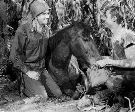 Gallant Bess (1946)