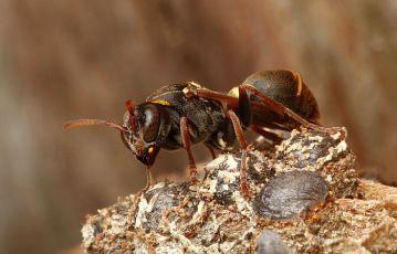 Nelítostné války hmyzu (2011) [TV seriál]