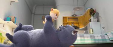 Příběh koček (2018)