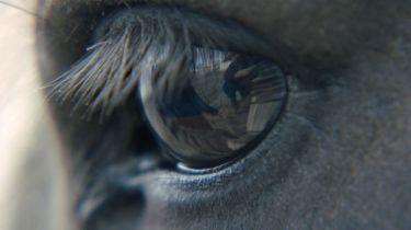 O koních a lidech (2013) [DVD kinodistribuce]