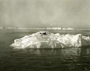Eskimo (1930)