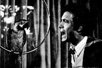Coartada en disco rojo (1972)
