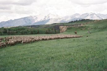 Zkrocená hora (2005)