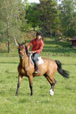 Inga Lindström: Koně z Katarinabergu (2007) [TV film]